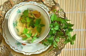 tisane plantes medicinal